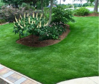 Zeon zoysiagrass is a fine-textured turfgrass that makes a beautiful, dark green, shade- & drought-tolerant lawn.