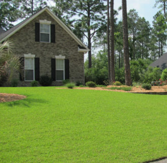 Centipedegrass is a slow-growing, apple-green colored, coarse-leaved, low maintenance turfgrass.