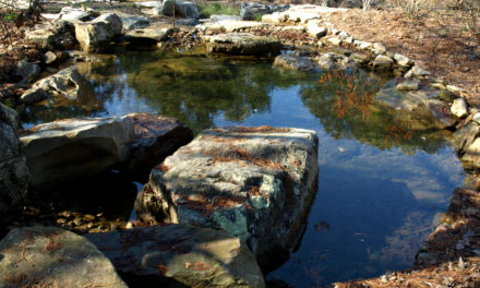 Aquatic Garden Pond & Pool Construction
