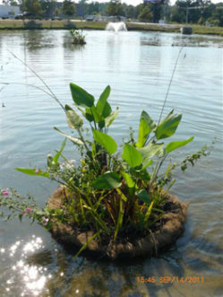 Floating wetland newly planted
