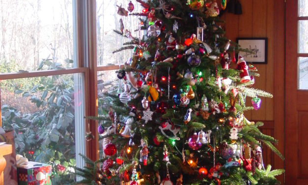 Safety Tips for Enjoying Your Christmas Tree