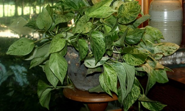 Prepare Houseplants to Move Back Inside