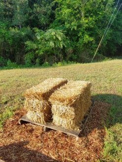Start with quality straw bales that are free of weed seed and insects.