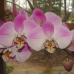 Orchids for the New Year