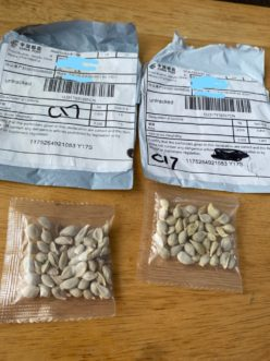 Unsolicited packages of seeds, many involving addresses from China, have been reported to agriculture officials by U.S. citizens from coast to coast. Image Credit: Washington State Department of Agriculture