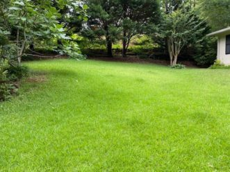 Lush lawns have always been highly sought after in residential landscapes. LayLa Burgess, ©2020 HGIC, Clemson Extension