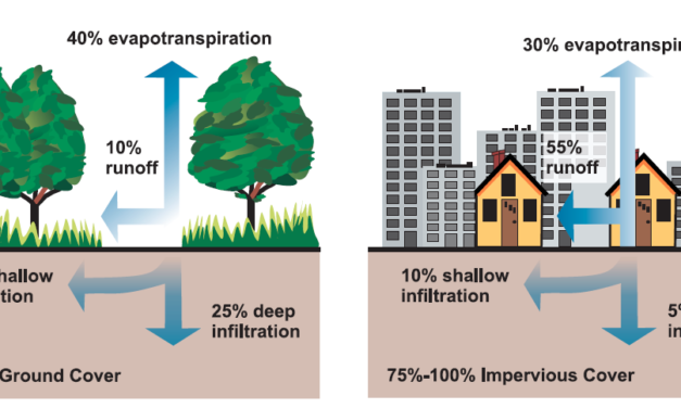 Trees for Stormwater Management