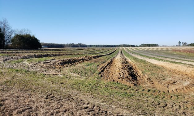 SC Fruit and Vegetable Field Report January 4, 2021