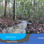 The Hyporheic Zone and Streams