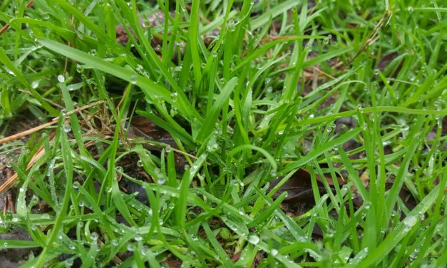 Plan Winter Weed Control Now